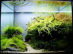 2011 AGA Aquascaping Contest - Entry #3
