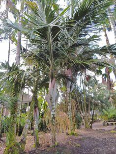 Fertilizer For Organic Gardening Refferal: 6489679537 Gardening Supplies, Tropical Garden, Organic Gardening, Palm Trees, Garden Landscaping, Philippines, Hawaii, Most Beautiful, Landscape