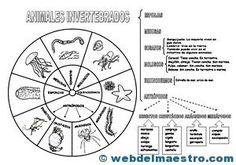 II>★★★★ Animales invertebrados - Recursos educativos y material didáctico para niños de primaria. Descarga Animales invertebrados gratis.