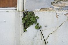 growing through the cracks.