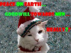 Cranky Christmas Kitty