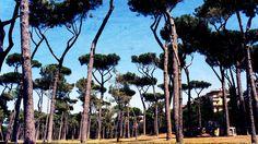Mainostajat puissa, ajatukset metsässä