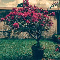 O jardim do meu coração