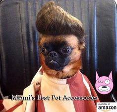 Miami's Best Pet Accessories. Does your dog like to be brushed? Check us out on Amazon