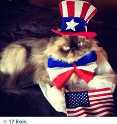 11 Cats That Are More Patriotic Than You Are! God Bless #MEOWICA! | Get It Free - Freebies, Deals, Coupons