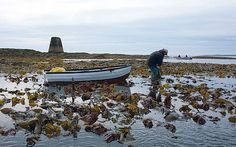 The Irish were eating seaweed centuries before sushi came to its shores. Simon   Beckett joins the harvest, and discovers that hand-picked dulse and   carrageen makes remarkably good bread, broth and even chocolate jelly.
