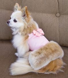 Susan Lanci Nouveau Bow Fox Fur Dog Harness Jacket