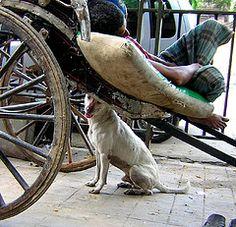 Rickshaw puller sleeps while his dog keeps guard.