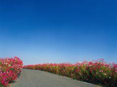 Flower Road HD Wallpaper