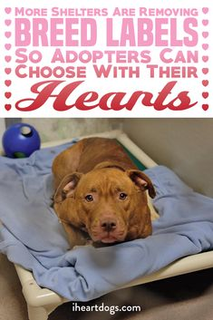 Good news for shelter pets! Let your heart lead the way!!