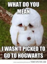 I know the feeling, little owl.