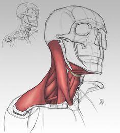 Anatomy Demos via cgpin.com