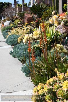 Landscape Succulent Garden Design, Pictures, Remodel, Decor and Ideas - page 3...GORGEOUS!