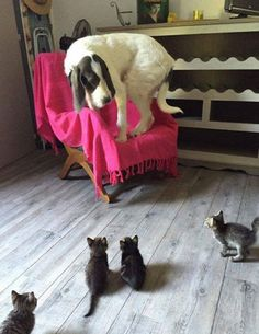 Cornered by kittens