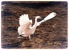 Heron, Alenquer (2014)