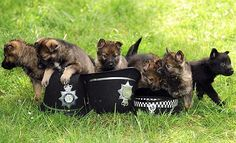 cop dogs