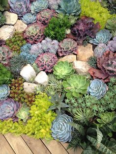 Talk about planting inspiration! Succulents planted in Phillip Withers' show garden, 'My Island Home' at the 2014 Australian Garden Show Sydney. Succulent Rock Garden, Succulent Landscaping, Succulent Gardening, Landscaping Plants, Cacti And Succulents, Planting Succulents, Organic Gardening, Garden Border Plants, Garden Borders