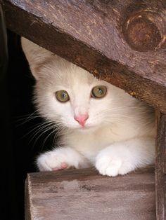 CyBeRGaTa - Cats, Memes, New Mexico  http://cybergata.tumblr.com/