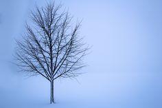 C'era in quei giorni una spessa coltre di neve, e continuava a nevicare, anche se meno fitto. Ma invece di cancellare i profili dei pini e del bambù, quel greve mantello pareva segnarne ancor più la varietà delle forme...(Murasaki Shikibu, Genji Monogatari)