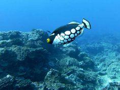 Beautiful Underwater Fish Picture in Sodwana Bay in Durban