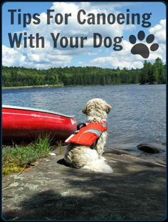 Kayak Camping Tips For Canoeing With Your Dog - Canoeing with your dog doesn't have to be stressful. Learn how to introduce your dog to a canoe. Get tips for keeping your dog safe on the water and a checklist for necessary items to take with you. Canoe Trip, Canoe And Kayak, Kayak Fishing, Fishing Boats, Kayak Dog, Camping En Kayak, Outdoor Camping, Camping Tips, Camping Jokes