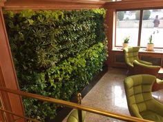 Květinová stěna - lobby Astoria Hotel, Medical Spa, Plants, Plant, Planets