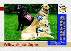 Service Dogs...