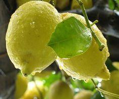 Tagliate 2 limoni e metteteli sul comodino. Quando saprete il perché non potrete più farne a meno