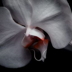 I have nothing that defines me more than the illusions I've created. I am an unknown to all including myself. P.s. One of my glorious followers introduced me to these orchids love at first sight. - #photo #pic #picture #snapshot #art #picoftheday #colour #all_shots #exposure #composition #focus #capture #moment #life #infj #jj_sombre #macro_highlight #sombresociety #sombrescapes #seamyphotos #featuremeseas #flowers by marcofcane