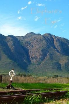 Pictures from South Africa Elephant Eye, Close To Home, South Africa, Pictures, Photos, Beautiful Places, Gardening, Mountains, Eyes