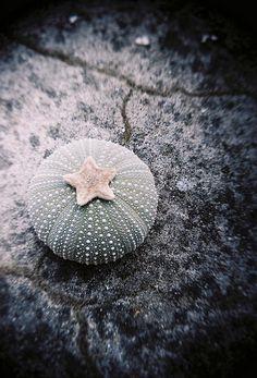 Sea urchin by Jelle Knüppe