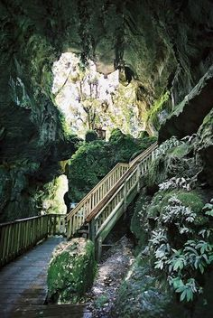 Natural Bridge/ Waitomo Caves in Waikato, New Zealand.....Great tubing here # glow worm caves