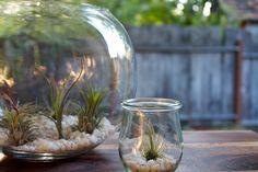 terrarium-plante-épiphytes-cailloux-blancs