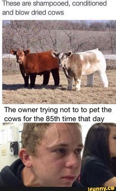 Crazy Funny Memes, Really Funny Memes, Funny Relatable Memes, Funny Texts, Funny Stuff, Random Stuff, Stupid Memes, Funny Things, Too Funny