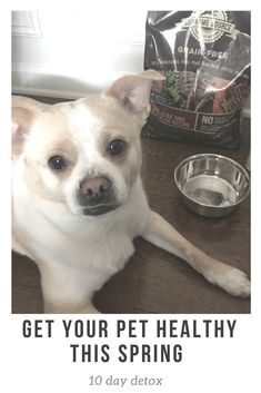 10-day detox for our dog! See how we're using Supreme Source pet food to get our pup feeling great. #SuperFoodSwitch, #IC AD