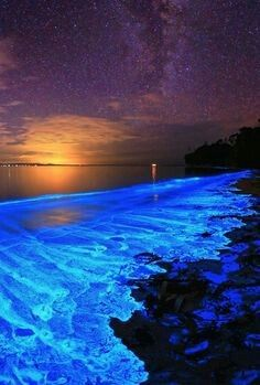 The bioluminescent noctiluca scintillans – an algae known otherwise as sea sparkle of Australia's Jervis Bay.