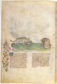 On Plants — Viewer — World Digital Library Medieval Manuscript, Illuminated Manuscript, Medieval Life, Stippling, Science And Nature, Lettering, Illustration, Plants, Painting