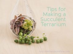 Succulent Terrarium Tutorial  - cute blog by www.succulentsandsunshine.com - supplies are all available at Armstrong! :-)