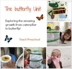 The Butterfly Unit by Teach Preschool