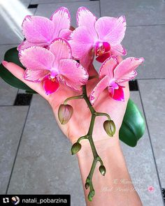 Orchid Fertilizer, Types Of Orchids, Orchid Care, Beautiful Flowers, Centerpieces, Bouquet, Rose, Drawings, Plants