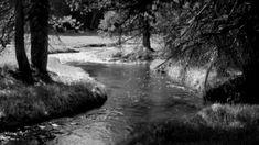 gifs passaros e rios tumblr - Pesquisa Google