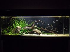Low Tech Tank Show-and-Tell (low tech can be lush, too! =) - Page 48 - The Planted Tank Forum #aquariumideasfreshwater
