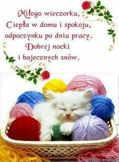 Crochet Hats, Humor, Cat, Good Night, Knitting Hats, Humour, Cat Breeds, Funny Photos, Funny Humor
