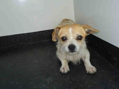 PetHarbor.com: Animal Shelter adopt a pet; dogs, cats, puppies, kittens! Humane Society, SPCA. Lost & Found.