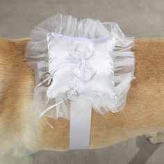 Teddy, my Dog, will be my ring bearer. :)