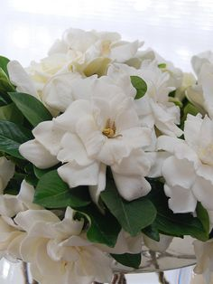 Love Gardenia flower but not lotions or perfumes called gardenia