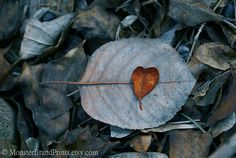 hearts in nature  by ArabellaReason on Etsy