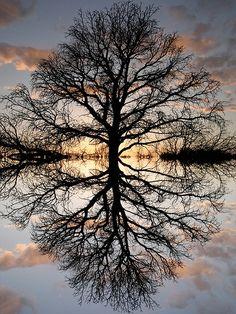 La Creación de Dios en fotografías.