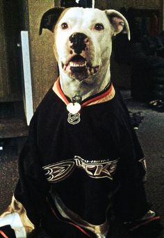A proud, good looking doggie Ducks fans here. He looks ready to take the ice almost!