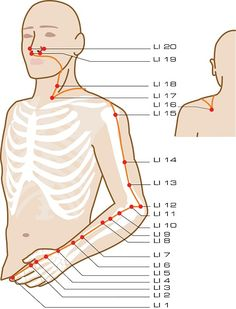 Intestino Grueso Acupuncture Points